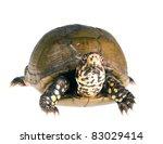 three toed box turtle ... | Shutterstock . vector #83029414