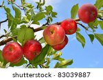 Red Apples Grow On A Branch...