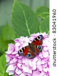 A Red Butterfly Rests On A...