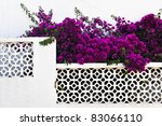 Phlox On The White Wall