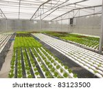 hydrophonic plantation   Shutterstock . vector #83123500