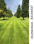 rows of cypress and pine trees on a green lawn - stock photo