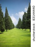 rows of cypress trees on the green lawn - stock photo