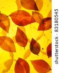 yellow and red leaves background   Shutterstock . vector #83180545
