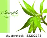 beautiful bamboo leaves with... | Shutterstock . vector #83202178