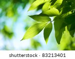 Green Leaves.nature Background