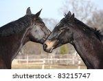 two black horses nuzzling each...   Shutterstock . vector #83215747