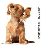 Stock photo young puppy listening to music on headphones 8323504