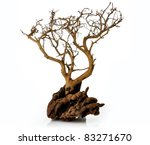 A Dry Tree On White Background