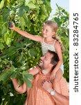 fig   family picking of tree...   Shutterstock . vector #83284765