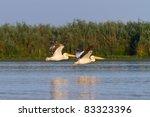 pelicans in flight in danube...   Shutterstock . vector #83323396