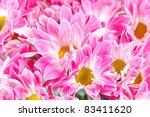 chrysanthemum flowers | Shutterstock . vector #83411620