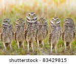 Burrowing Owls Annual Meeting....