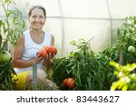 Mature Woman Picking Tomato In...