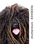 close up head study of a puli... | Shutterstock . vector #83448346
