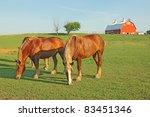 Several Belgian Draft Horses...