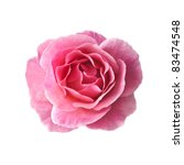 Stock photo pink rose isolated on white background 83474548