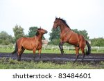 two horses playing | Shutterstock . vector #83484601