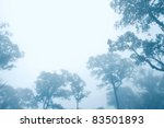 trees in fog. look up in the... | Shutterstock . vector #83501893