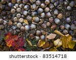 """Forest Floor""  A natural background photo of acorns on the forest floor. - stock photo"