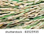 Close Up Of Rice Seed Or Paddy...