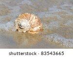 Sea Snail.