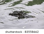 "Small photo of Brazil Caimen or ""jacaré"" (alligatoridae family) pops its head out of the water"