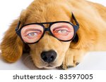 A funny looking dog wearing silly novelty glasses with big eyes. - stock photo