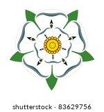 Stock photo white rose of yorkshire isolated on plain background 83629756