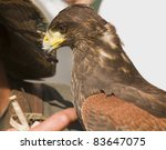 Falconer and buzzard - stock photo