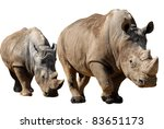 Two White Rhinoceros ...