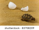 closeup of a small steppe... | Shutterstock . vector #83708209
