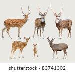 sika deer  axis deer  samba... | Shutterstock . vector #83741302