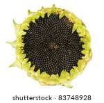 Sunflower With Seeds Isolated...