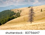 Dry tree on a hillside the Ukrainian Carpathians - stock photo