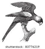carolina parakeet or conuropsis ... | Shutterstock .eps vector #83776219