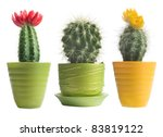 Cactuses On White Background