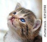 Stock photo funny kitten 83910988