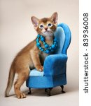 Stock photo abyssinian kitten age month 83936008