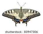 Stock photo old world swallowtail papilio machaon butterfly isolated on white background 83947306