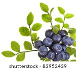 Blueberry Bilberry Huckleberry...