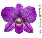 Single Purple Orchid Isolate