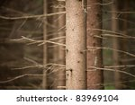 pine tree trunk - stock photo