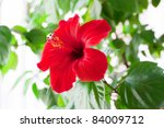 Red Hibiscus Flower Detail