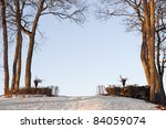 Winter landscape with bare trees and gateway  in stone wall - stock photo