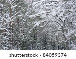 tree trunks in a winter forest with snow on branches - stock photo