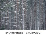 Background of tree trunks covered in snow - stock photo