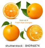 vector set of fresh ripe... | Shutterstock .eps vector #84096874