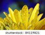 Yellow Flowers  Rudbeckia...