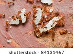 fire ant in nature or in the garden - stock photo
